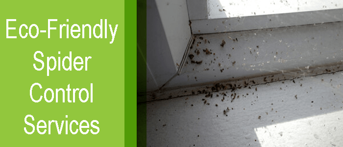 Eco-Friendly Spider control Services