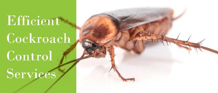 Efficient Cockroach Control Service