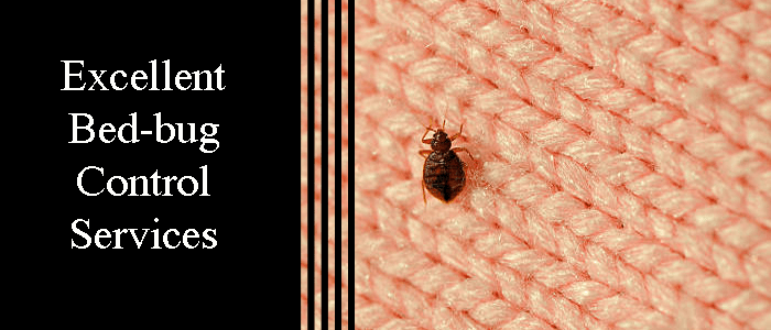 Excellent Bed Bug Control Services